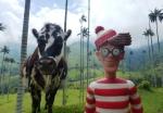 30/06/2013 – Colombie, Salento : Charlie s'é-meuh facilement devant une belle dame