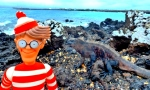 29/07/2013 – Equateur, Isabela - Galapagos : Charlie au pays des iguanes