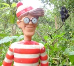 9/11/2013 – Ouganda, Bwindi : Charlie fait la connaissance de King-Kong !