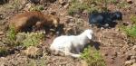 2/12/2013 - Éthiopie, Montagnes du Simien : une blonde, une brune, une rousse ... Le rêve de tout bouc ou de tout taulard qui se respecte (pas ma blague la plus fine, j'avoue...)