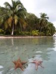 La bien nommée Starfish island
