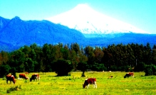 11 - Best of - Chili, Pucon