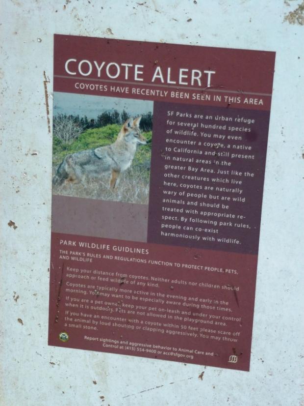 Les seuls coyotes que je connaissais étaient ceux du roi Lion. Et bah non !