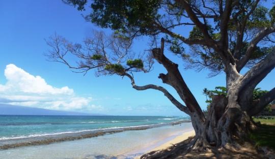 Ma plage préférée : Honokowai