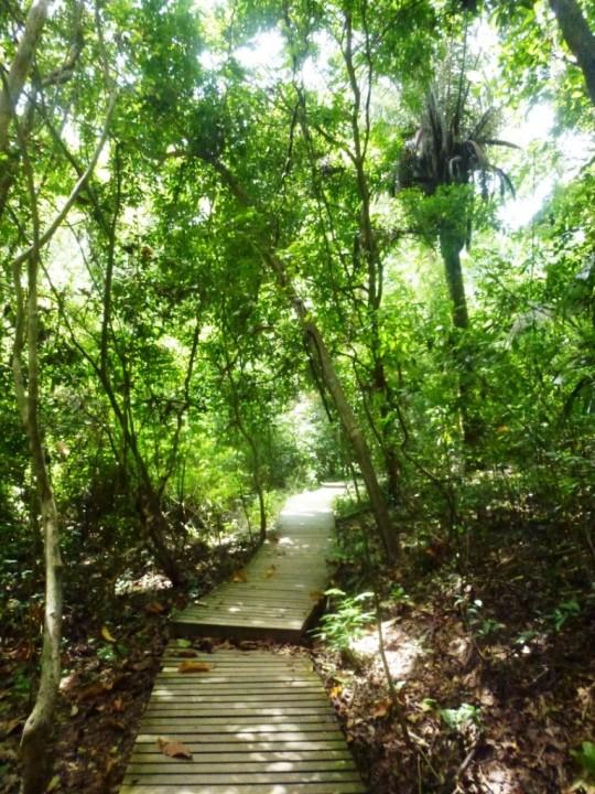 Sentier dans le parc Tayrona