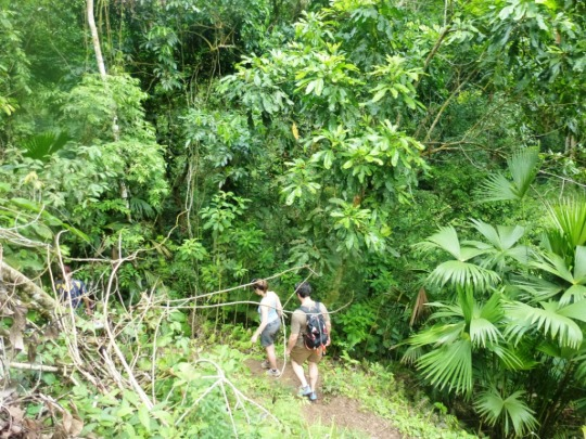 Jungle de Minca