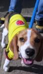 """11/06/2013 - San Gil, Colombie : L""""équipe de Colombie a du chien"""