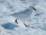 Animals - Antarctique (2)