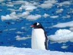 Animals - Antarctique (3)
