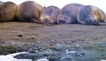 Animals - Antarctique (4)