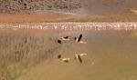 Animals - Bolivie - Salt Flats (1)