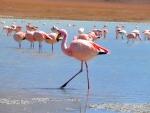 Animals - Bolivie - Salt Flats
