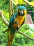 Animals - Colombie - Minca
