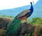 Animals - Colombie - San Gil (2)