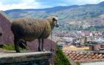 Animals - Colombie - Sogamoso