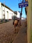 Animals - Cuba - Trinidad