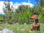 Animals - Equateur - Cotopaxi