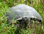 Animals - Equateur - Galapagos (2)