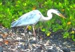 Animals - Equateur - Galapagos (3)