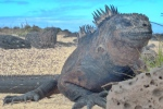 Animals - Equateur - Galapagos (6)