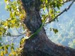 Animals - Laos - Huay Xai