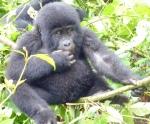 Animals - Ouganda - Bwindi (1)
