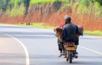 Animals - Ouganda - Kampala