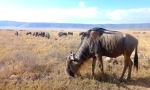 Animals - Tanzanie - Safari (11)