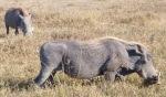 Animals - Tanzanie - Safari (12)
