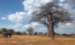 Animals - Tanzanie - Safari (5)