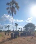 Animals - Tanzanie - Safari (6)