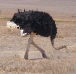 Animals - Tanzanie - Safari (7)