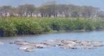 Animals - Tanzanie - Safari (8)
