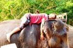 Animals - Thaïlande - Chiang Mai (2)