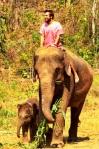 Animals - Thaïlande - Chiang Mai