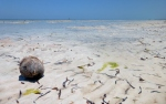 Beaches -Tanzanie - Zanzibar (2)
