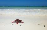 Beaches -Tanzanie - Zanzibar (3)