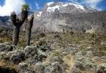 Mountains - Tanzanie - Kilimanjaro (5)