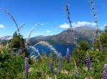 Nature - Argentine - Bariloche (4)