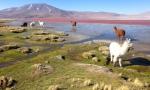 Nature - Bolivie - Salt Flats (4)