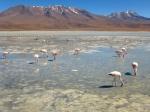 Nature - Bolivie - Salt Flats (5)