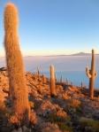 Nature - Bolivie - Salt Flats (6)