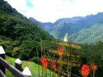 Nature - Colombie - Salento