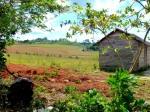 Nature - Cuba - Vinales (2)