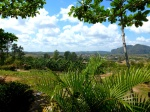 Nature - Cuba - Vinales (4)