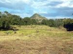 Nature -Ethiopie - Bahir Dar (1)