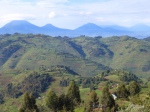 Nature - Ouganda - Bwindi