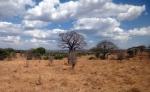 Nature - Tanzanie - Safari