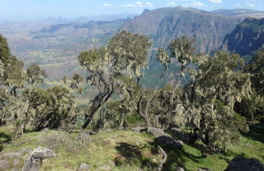 Simien Mountains - Day 1 (9)