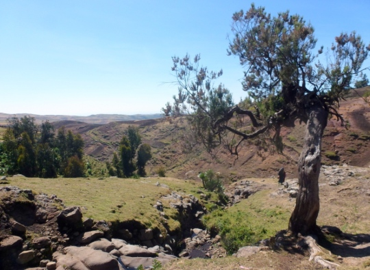 Simien Mountains - Day 2 (16)